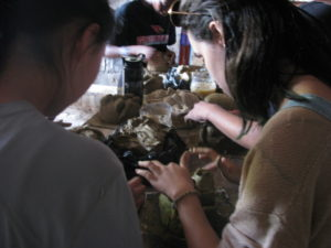 Cultural Education Blog